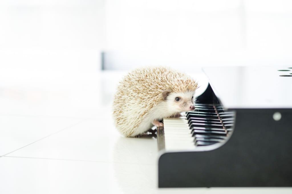 音楽著作権
